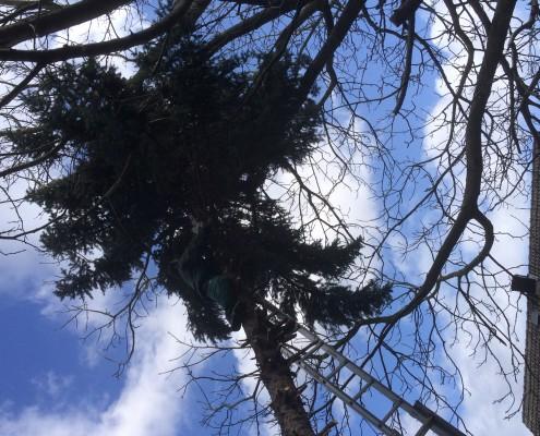 Klara Gartenbau Gmbh - Baumfällungen